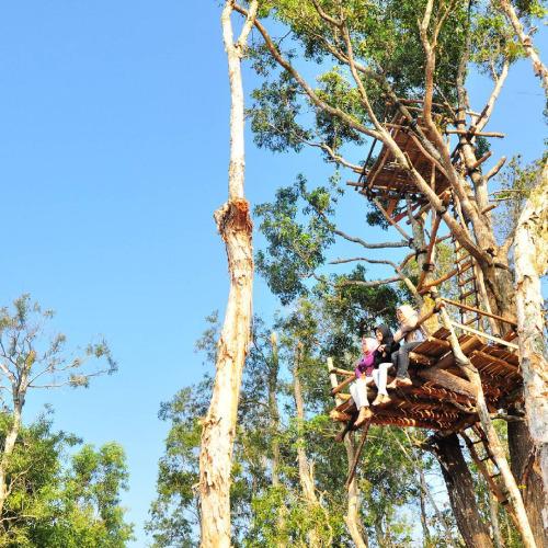 rumah-pohon-hutan-pinus-jogja