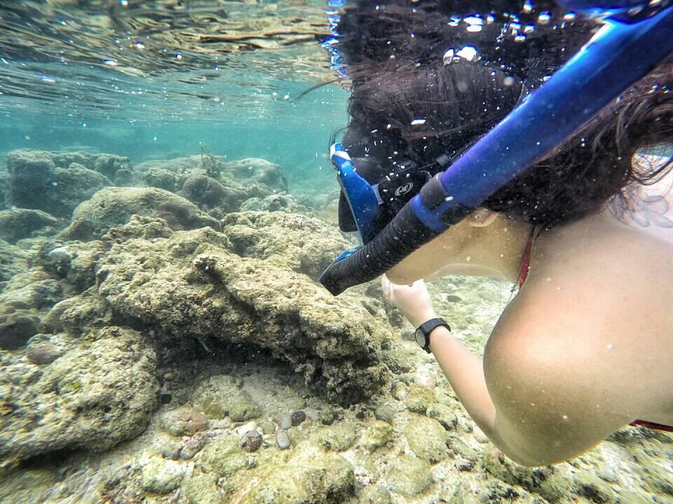 Snorkling-Pantai-Nglambor-Gunung-Kidul-Jogja