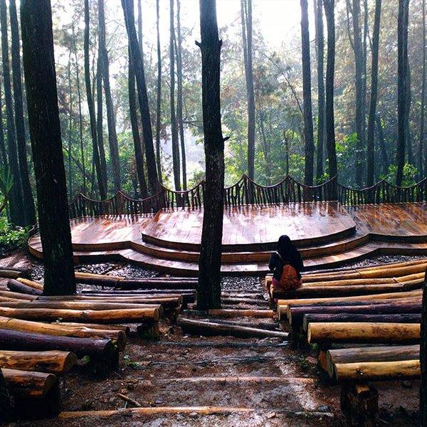 hutan-pinus-magunan